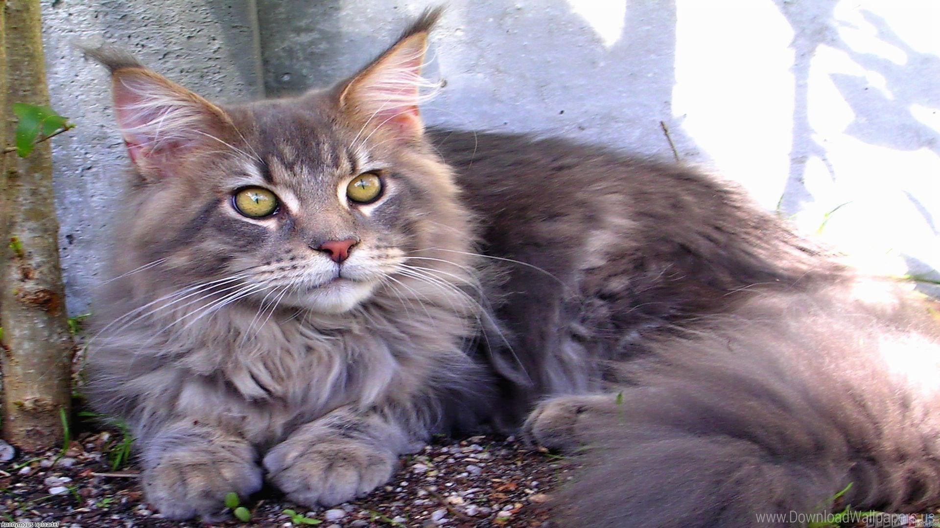 Astăzi, Ziua internațională a pisicii - Știrile A.M. Press |Ziua Internațională A Pisicii